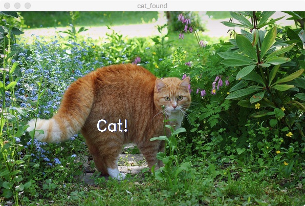 Кот найден